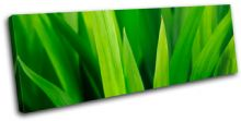 Grass Shoots Floral - 13-1387(00B)-SG31-LO